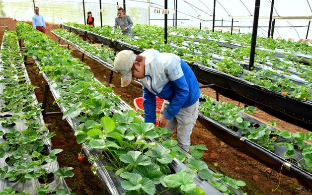 việc làm nông nghiệp tại hà nội 1