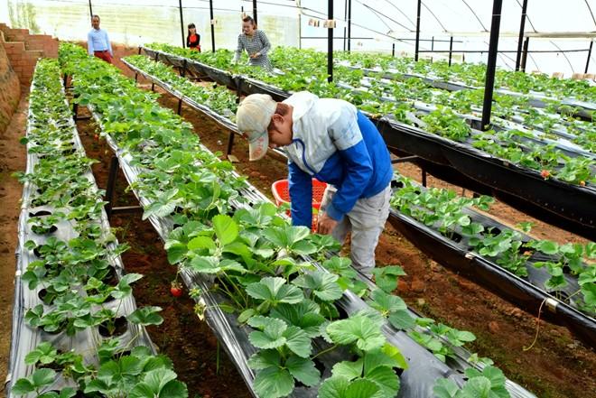 việc làm nông nghiệp