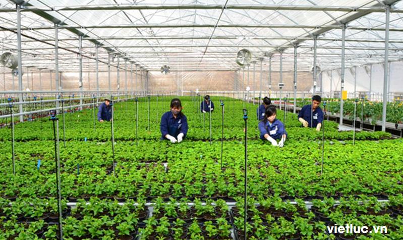việc làm nông nghiệp tại hà nội 2