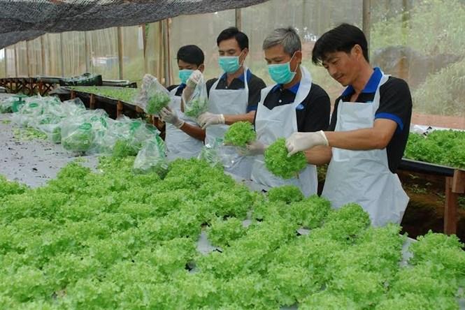việc làm nông nghiệp tại hà nội 4