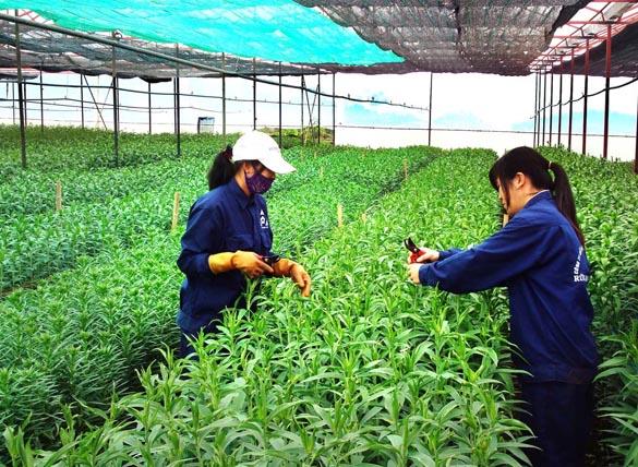 việc làm nông nghiệp tại hà nội