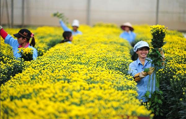 Sinh viên ngành nông nghiệp với cơ hội việc làm nông nghiệp tại hà nội